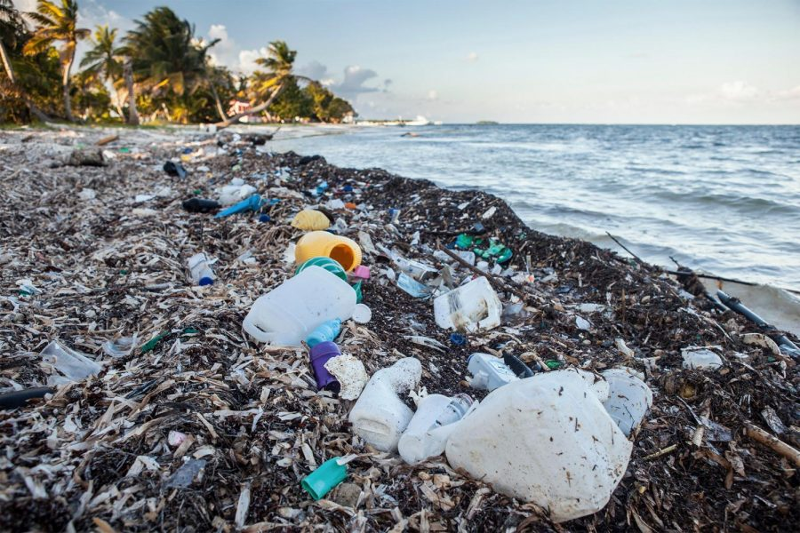 Seas+of+Plastic+Kill+Animals+and+Harm+Humans