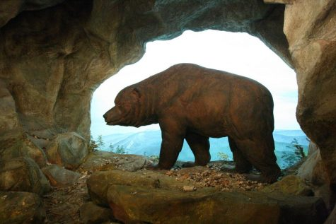 https://www.thoughtco.com/facts-about-the-cave-bear-1093335