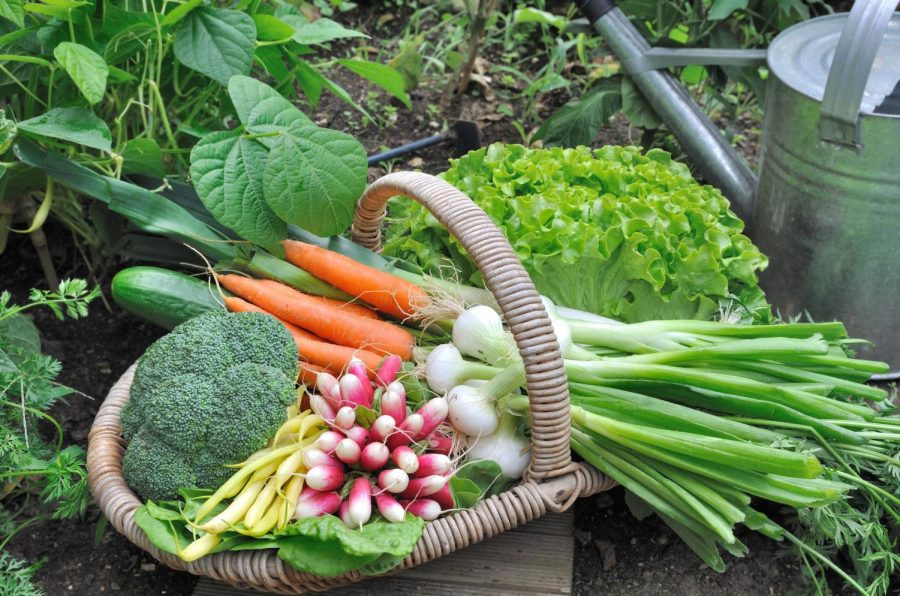The Capasso's Garden of Giving, located in Hudson, Massachusetts, has been donating fresh produce since 2011.