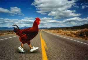 Ask Tristan: Why Did the Chicken Cross the Road?